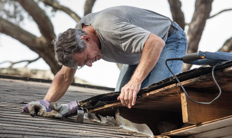 Common Roofing Issues That Lead to Animal Infestation